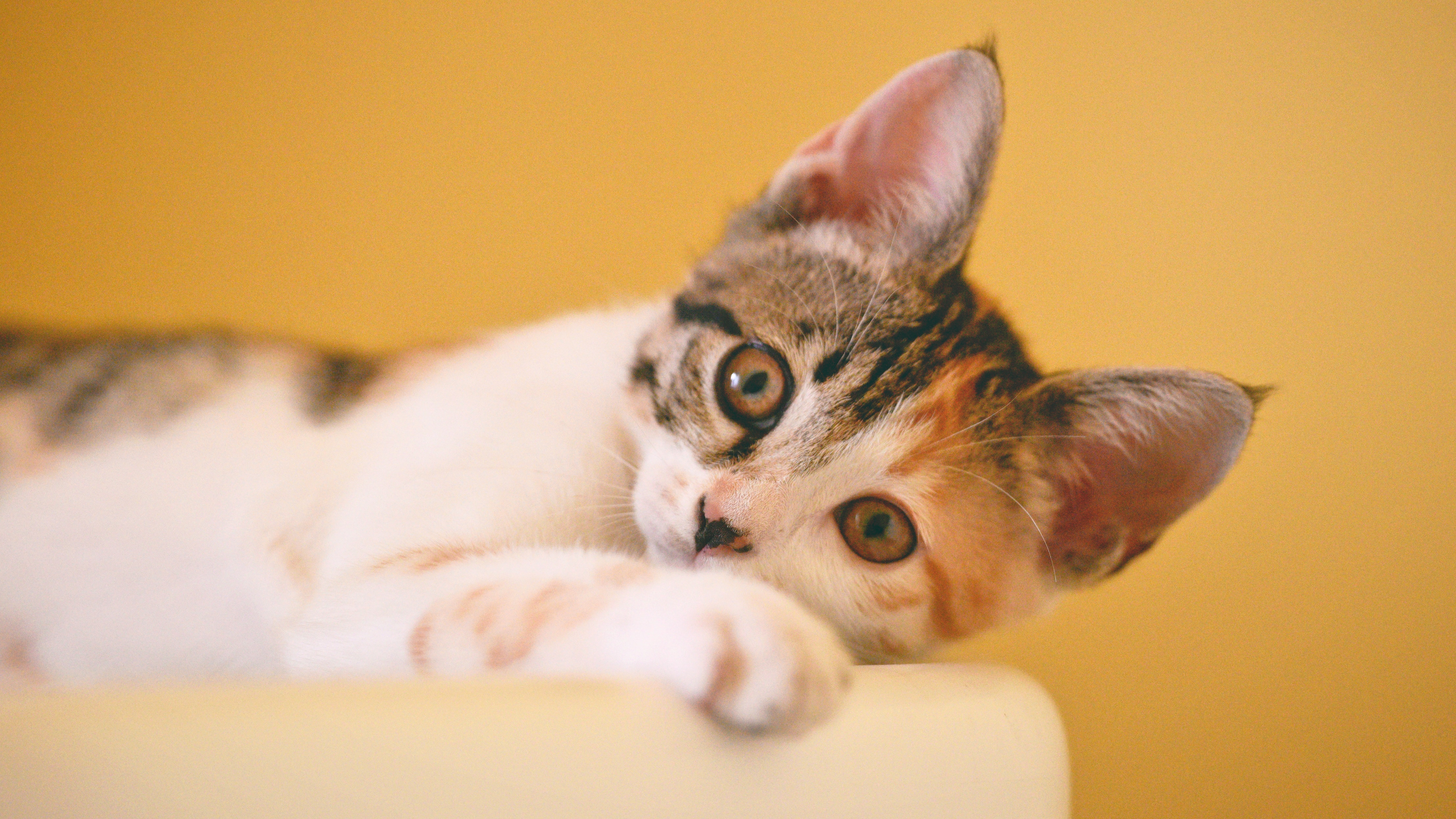 The Average Cat Owner Takes Seven Photos Of Their Pet A Day